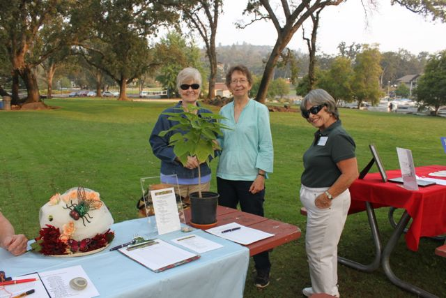 Interest Group displays drew attention at the Picnic